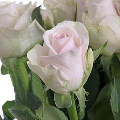 Роза Ауди