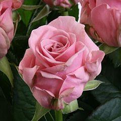 Роза Кеано