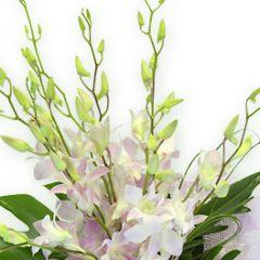 Дендробиум фото цветов