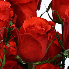 Роза Ред Юник