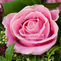 Роза Вакс розовая