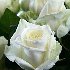 Роза Маруся