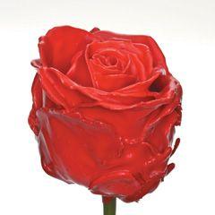 Роза Вакс красная