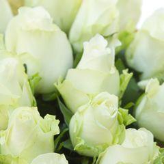 Роза А1