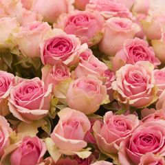 Роза кустовая Динара