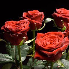 Роза Гран При Мьювисс