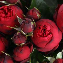 Роза кустовая Ред Пиано