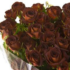 Роза кустовая Чокочино