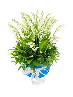 Букетов доставкой цветы москва букет синяя свадьба