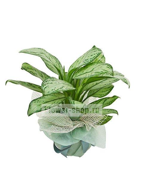 https://www.flower-shop.ru/images/goods/big2/134931.jpg