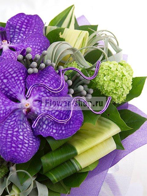 Садовый цветок водолей
