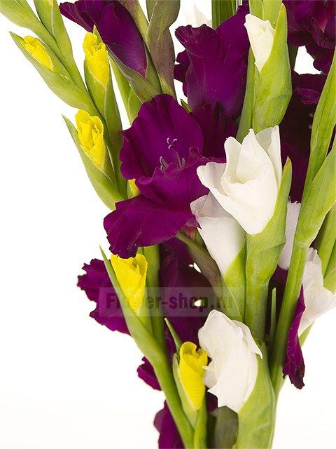 Цветы гладиолусы купить в москве