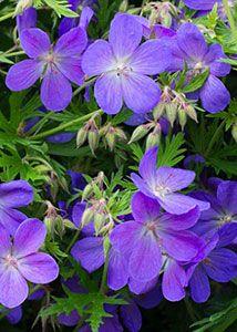 Через 100 лет цветы будут пахнуть в девять раз сильнее и слаще