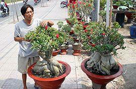 Флористы Хошимина готовятся к празднику Тет