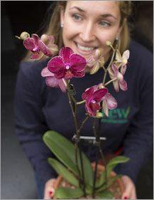Приглашаем в царство орхидей!