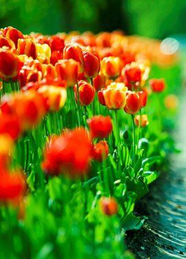 Найдены цветочные