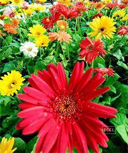 20 000 растений превратили индийский колледж в цветущий рай