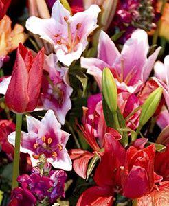 Международное цветочное шоу в Сиккиме намечено на апрель