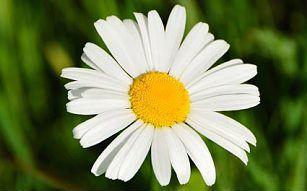 Зимой в Великобритании зацвело более 300 видов растений