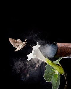 В симбиоз цветов и насекомых вмешались выхлопные газы