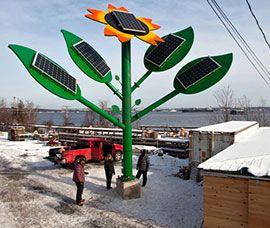 Гигантский подсолнух стал источником солнечной энергии
