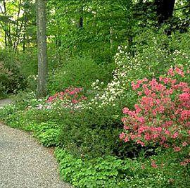 В США активно занялись ботаникой