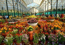 Цветочный фестиваль в Индии приурочили ко Дню республики
