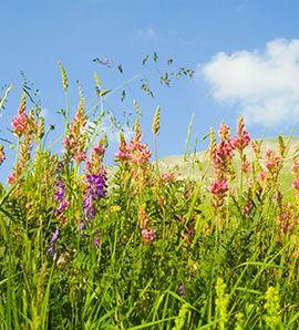 Красивые цветы реже вызывают аллергию