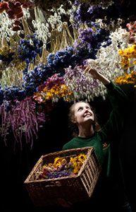 60-метровая цветочная гирлянда — миф или реальность?