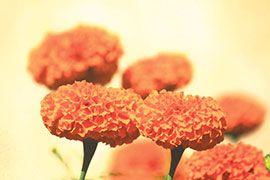 В Непале за пять дней продадут 1 500 000 цветочных гирлянд!
