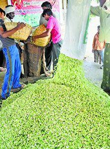 Экономике Индии поможет… жасмин