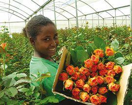 Экономика Зимбабве держится на садоводстве