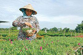Цветоводство – самая развитая сфера бизнеса в Долине Меконга