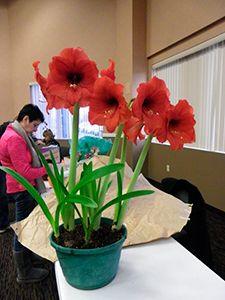Победителями цветочного фестиваля в Нью-Джерси стали флористы-любители